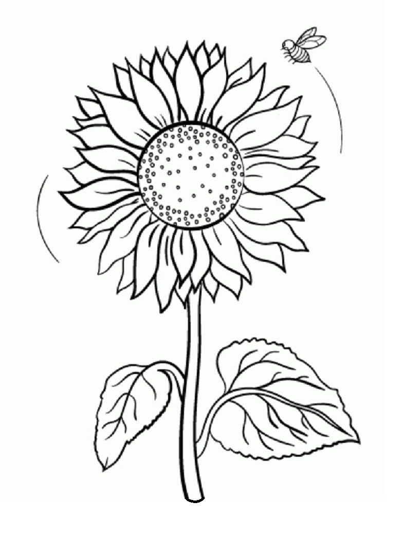 Top 20 Printable Sunflowers Coloring Pages