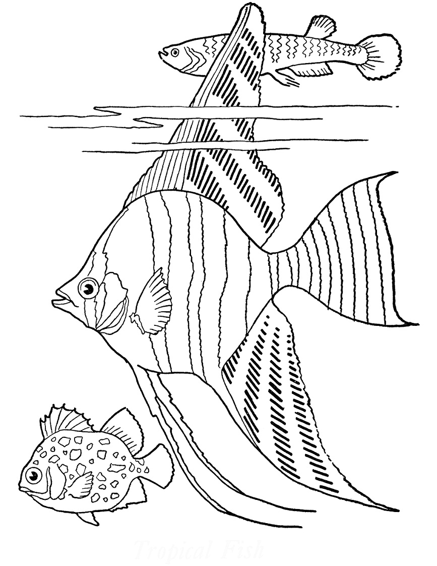 Top 20 Printable Fish Coloring Pages