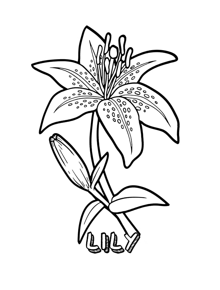 Top 20 Printable Lily Coloring Pages