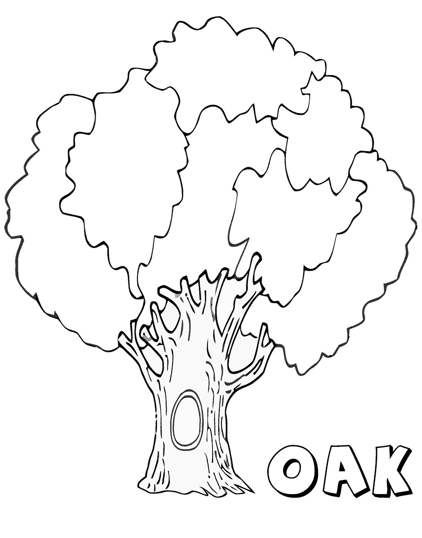Top 16 Printable Oak Coloring Pages