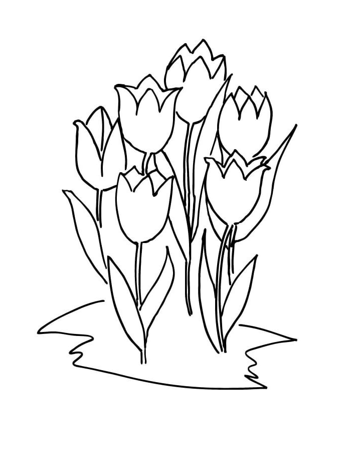 Top 20 Printable Tulips Coloring Pages - Online Coloring Pages