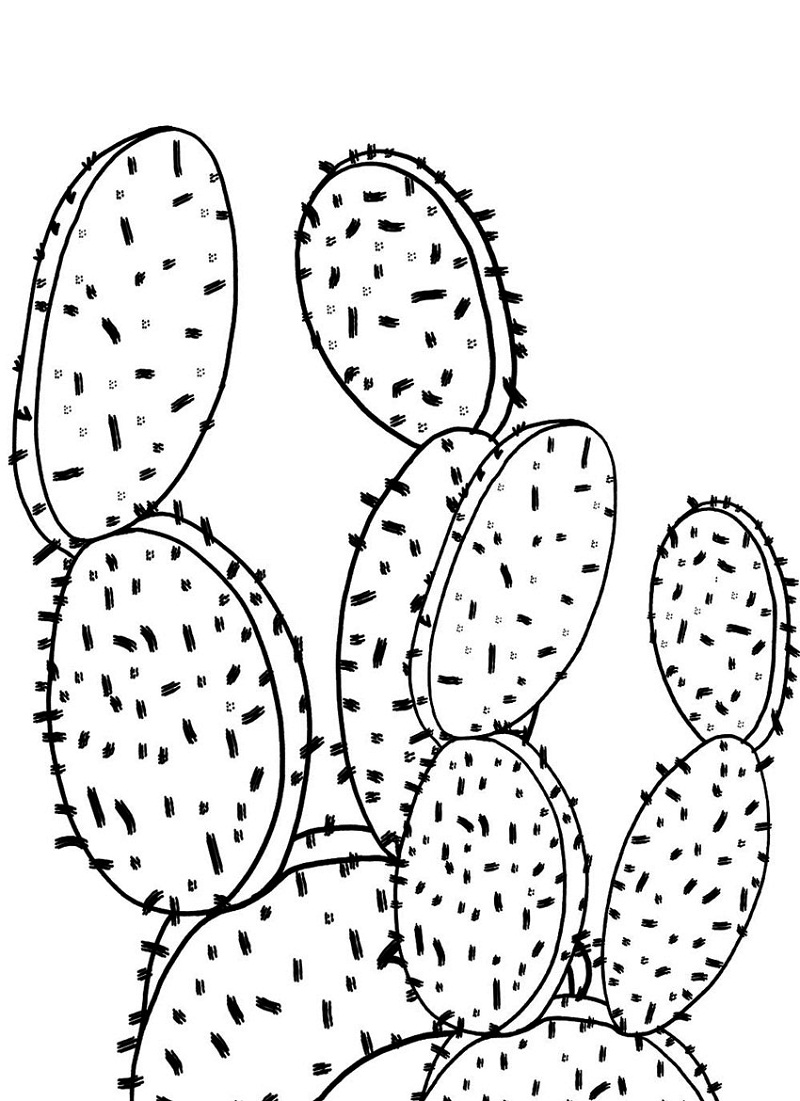 Top 20 Printable Cactus Coloring Pages