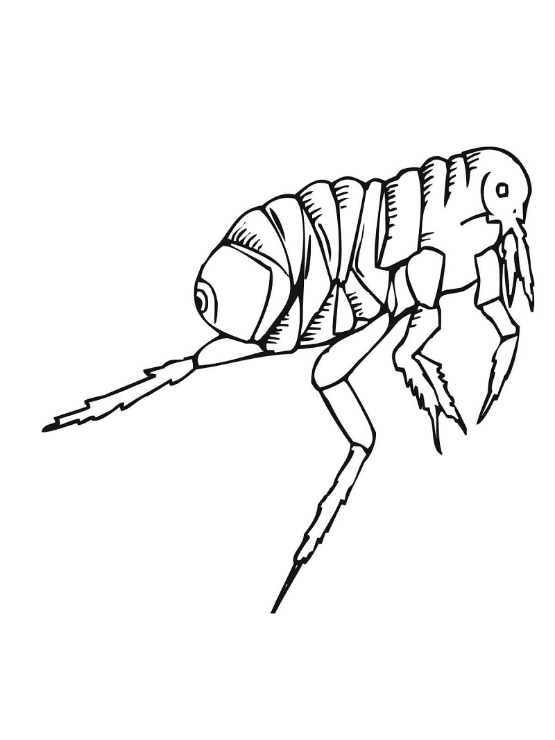 Top 20 Printable Insect Coloring Pages