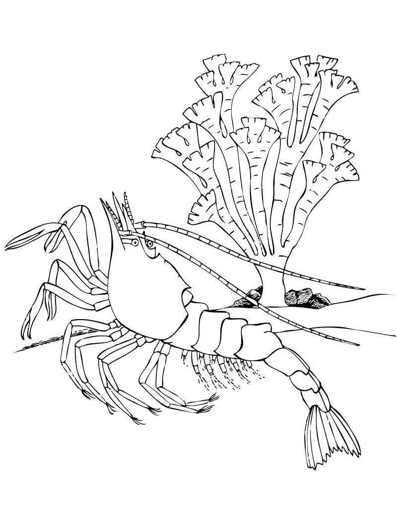 Top 20 Printable Crustacean Coloring Pages