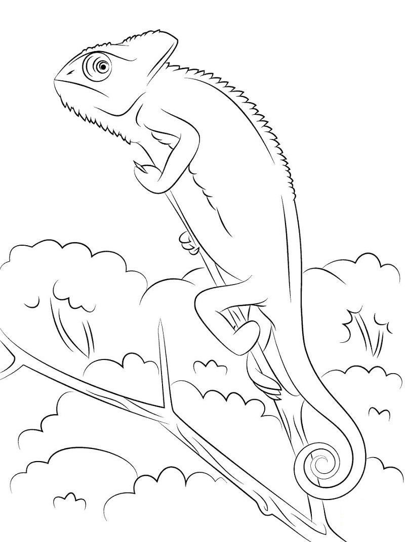 Top 20 Printable Reptile Coloring Pages