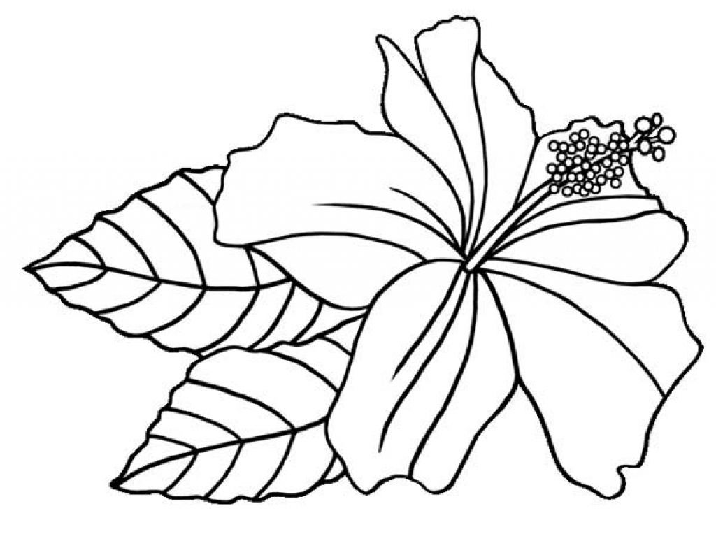flower Page Printable Coloring Sheets | Tropical Flower - Coloring ... | 774x1024