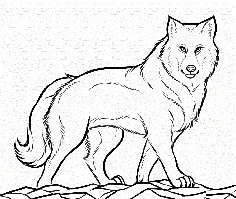 Top 20 Printable Wolf Coloring Pages