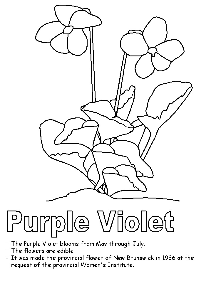 Top 20 Printable Violet Coloring Pages