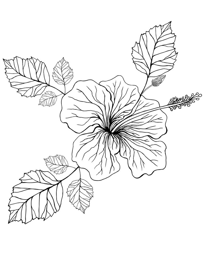 Top 20 Printable Hibiscus Coloring Pages