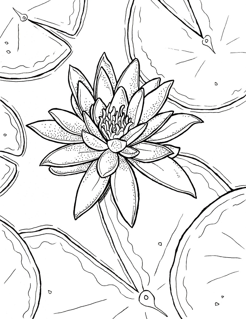 Top 20 Printable Water Lily Coloring Pages