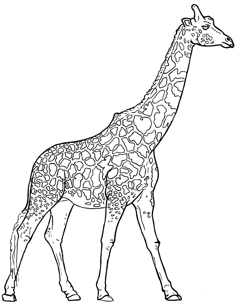 Top 20 Printable Giraffe Coloring Pages