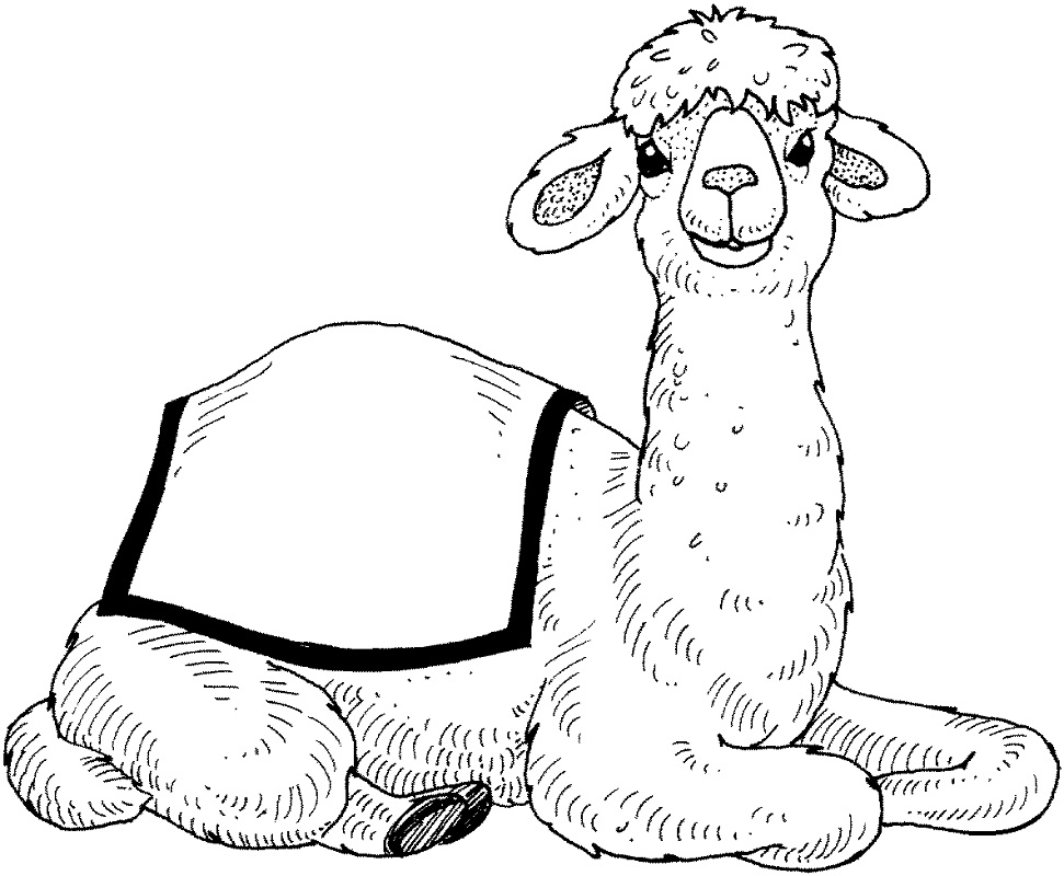Top 20 Printable Camel Coloring Pages