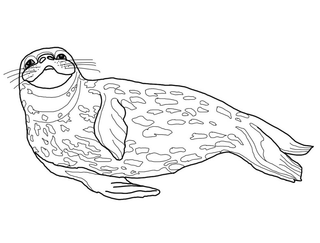 Top 20 Printable Seal Coloring Pages