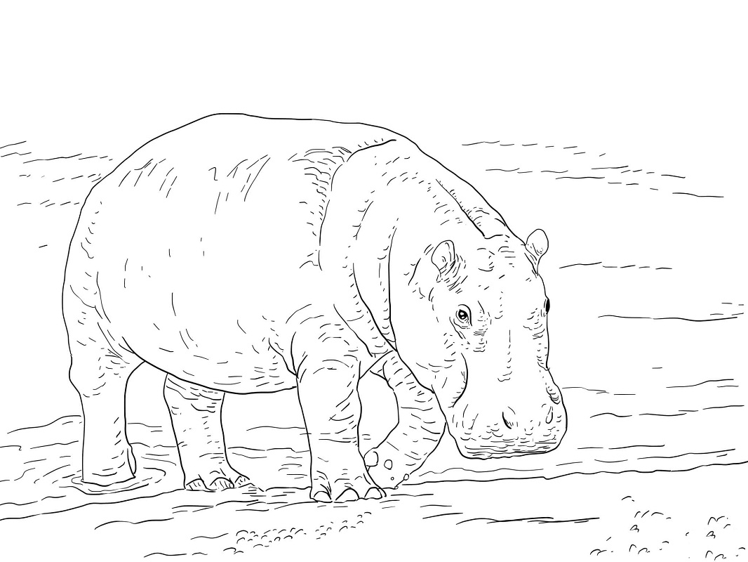 Top 20 Printable Hippo Coloring Pages