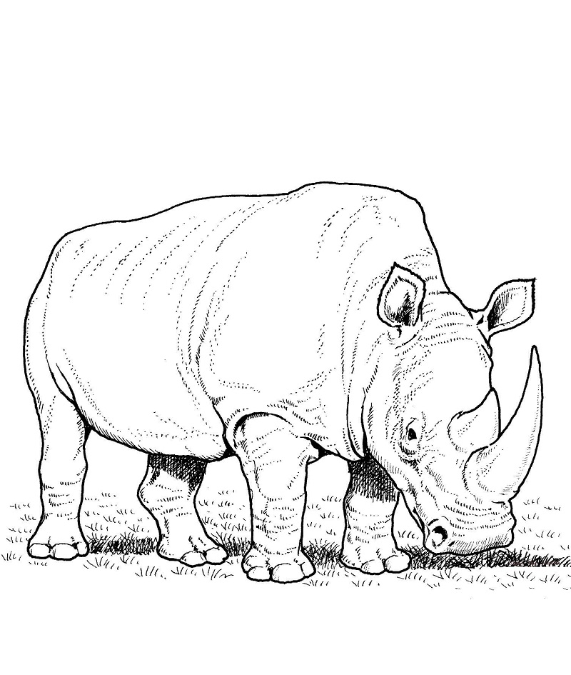 Top 20 Printable Rhino Coloring Pages