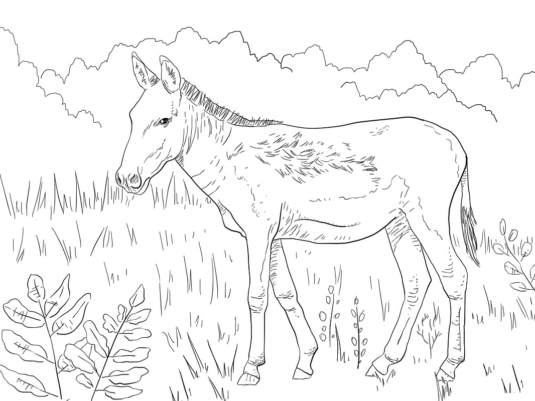 Top 20 Printable Donkey Coloring Pages