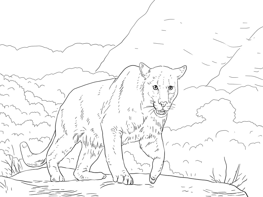 Top 20 Printable Cougar Coloring Pages