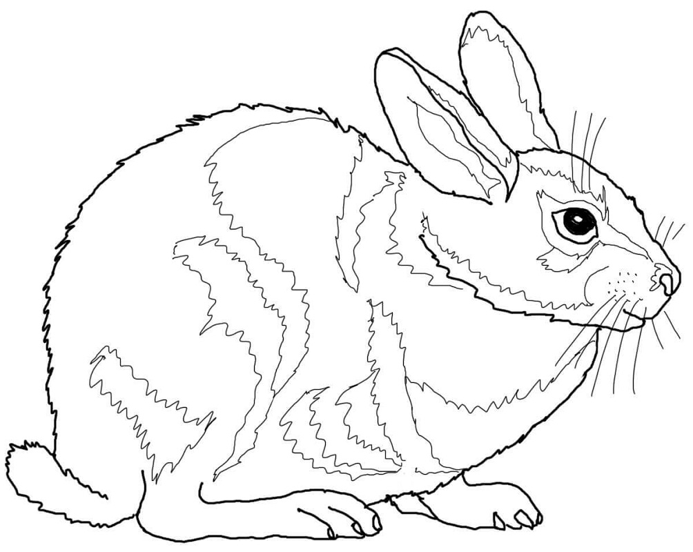 Top 20 Printable Rabbit Coloring Pages