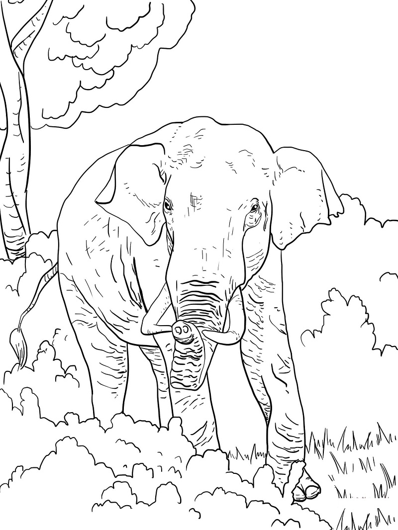 Top 20 Printable Elephant Coloring Pages