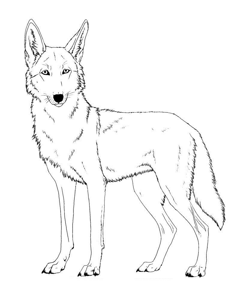 Top 20 Printable Coyote Coloring Pages