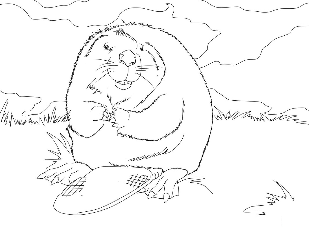 Top 20 Printable Beaver Coloring Pages