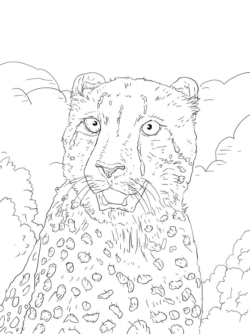 Top 20 Printable Cheetah Coloring Pages