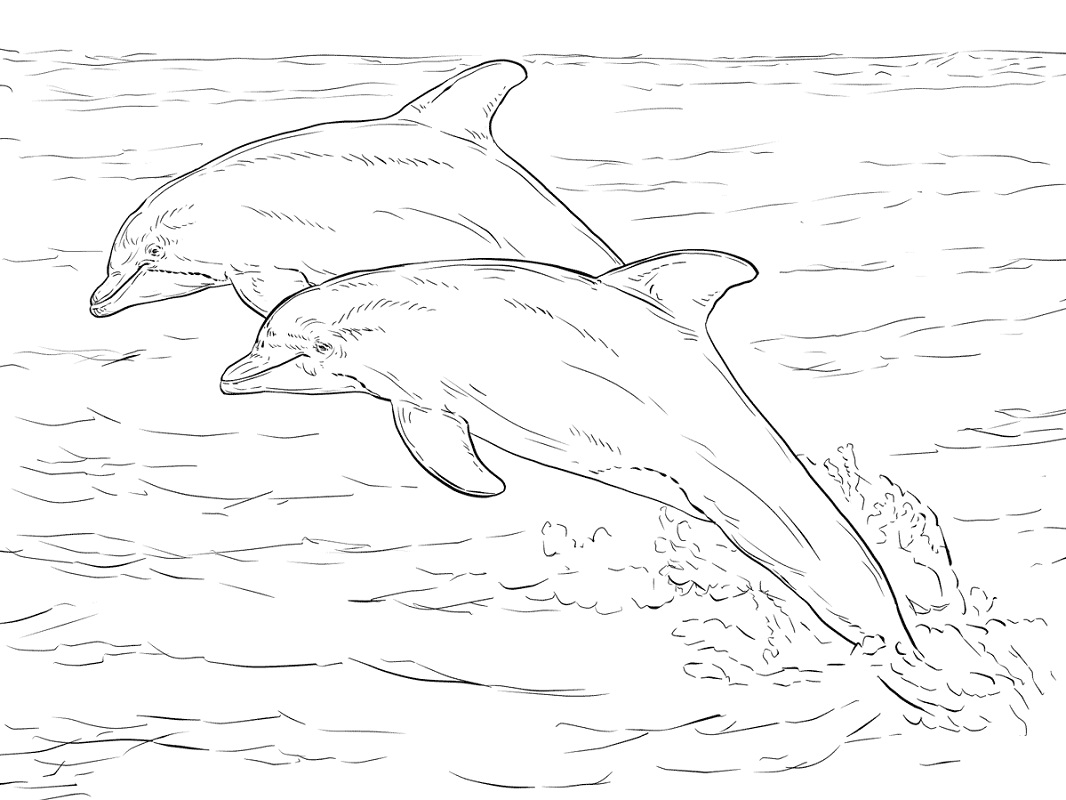 Top 20 Printable Dolphin Coloring Pages