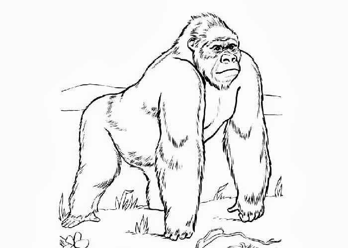 Top 20 Printable Ape Coloring Pages
