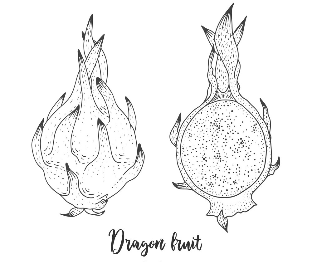 Top 20 Printable Dragon Fruit Coloring Pages