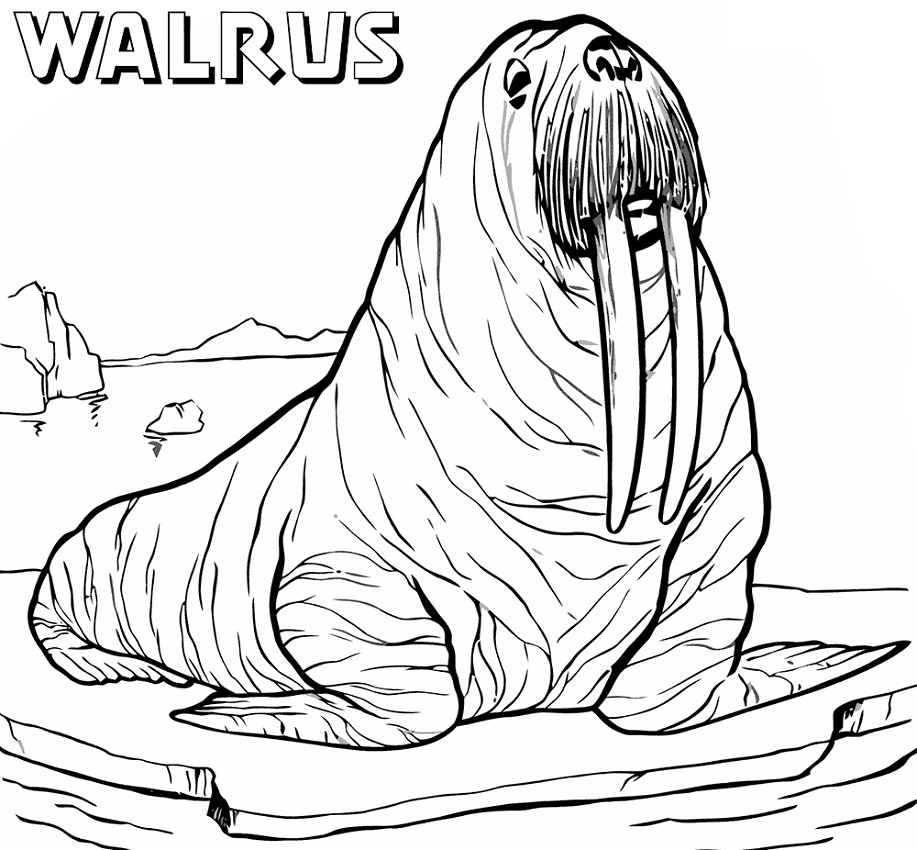 Top 20 Printable Walrus Coloring Pages