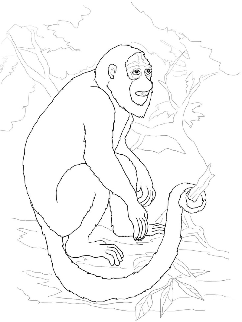 Top 20 Printable Monkey Coloring Pages