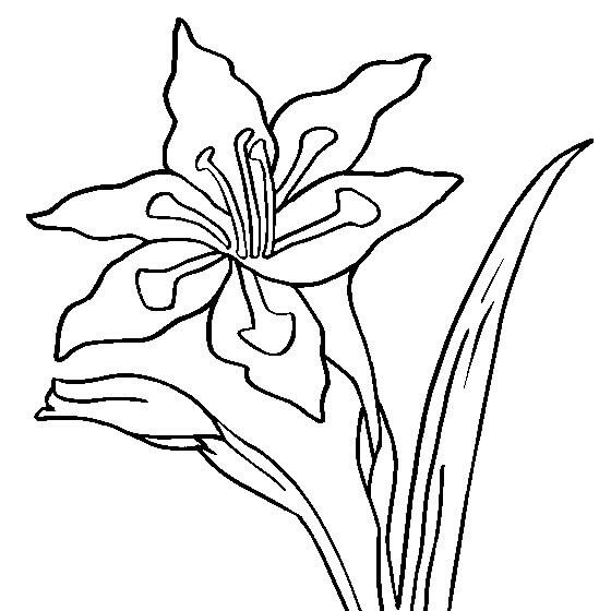 Top 20 Printable Gladiolus Coloring Pages