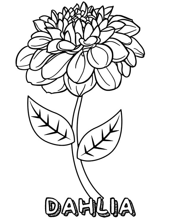 Top 20 Printable Dahlia Coloring Pages