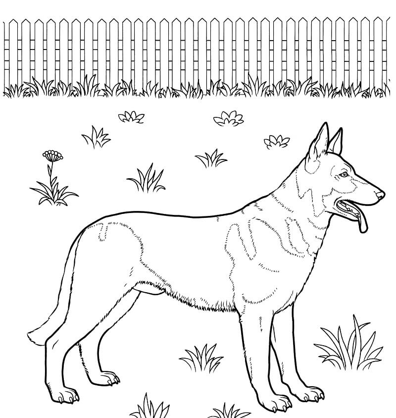 Top 20 Printable German Shepherd Coloring Pages