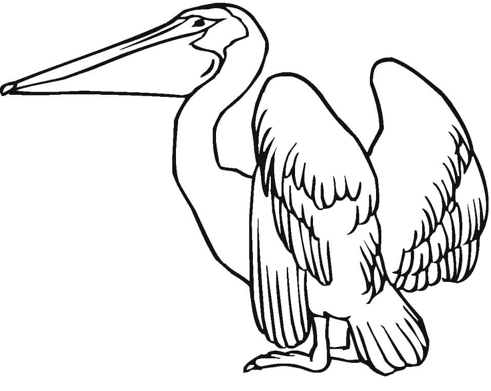 Top 34 Printable Pelican Coloring Pages
