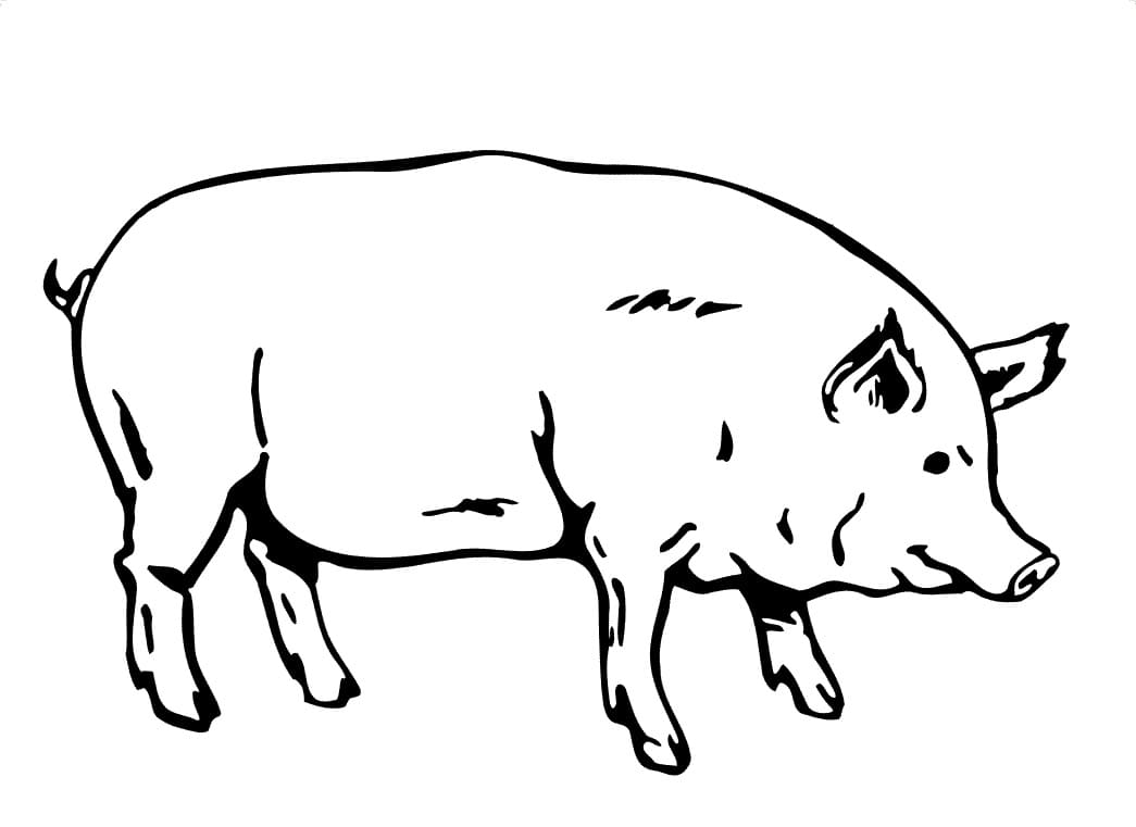 Top 60 Printable Pig Coloring Pages