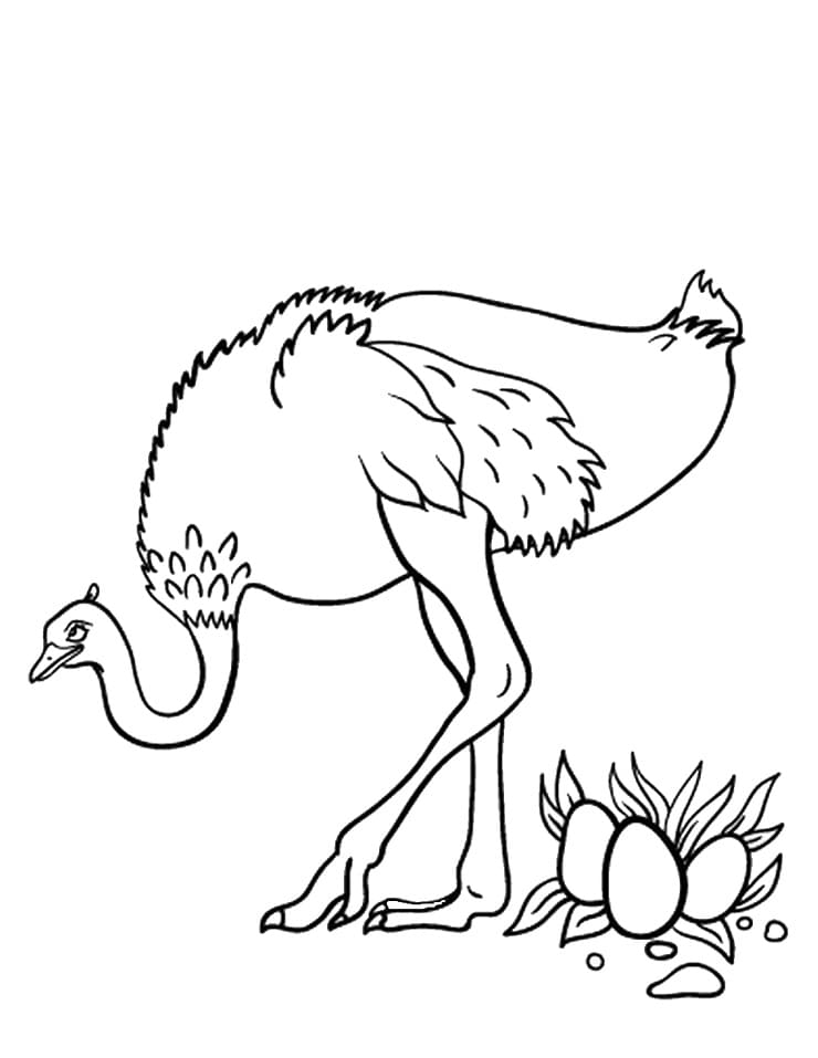 Top 50 Printable Ostrich Coloring Pages