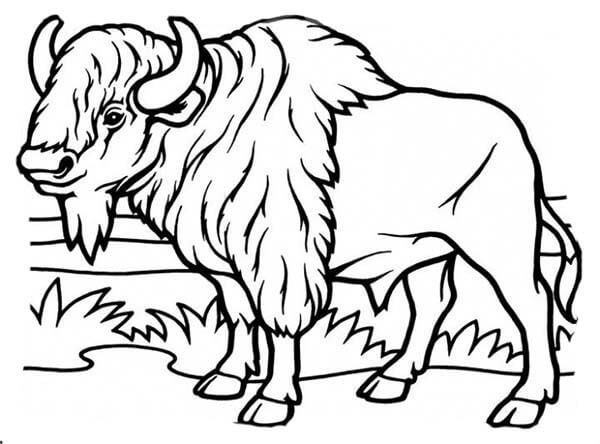 Top 45 Printable Bison Coloring Pages