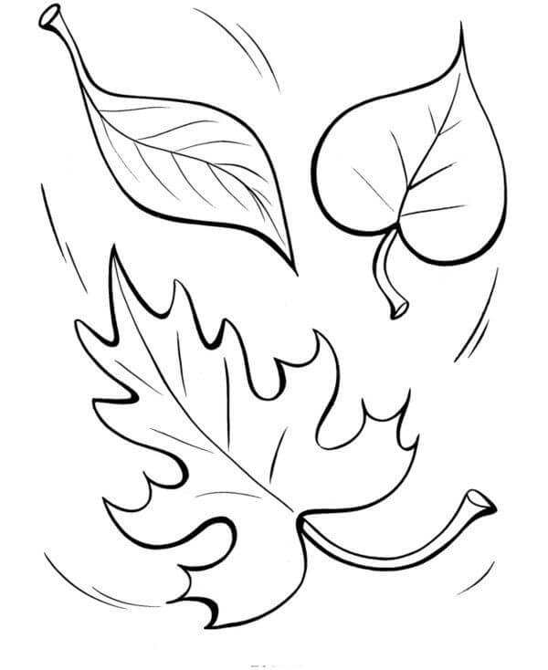 Top 20 Printable Fall Leaves Coloring Pages