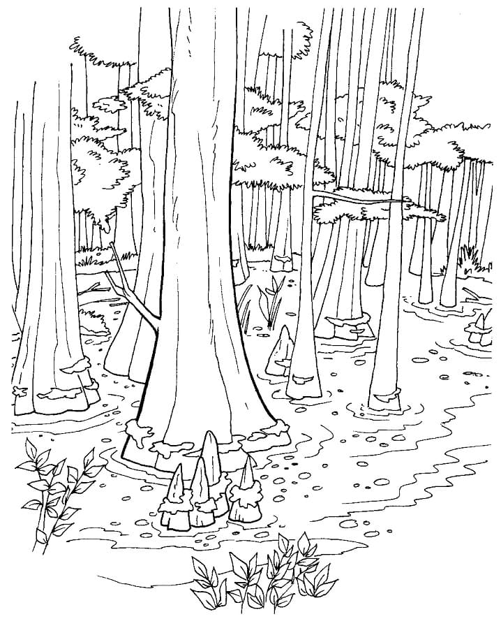 Top 24 Printable Forest Coloring Pages